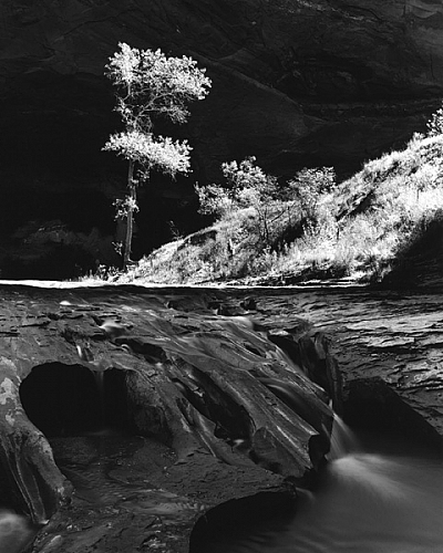 Afternoon Light, Coyote Gulch