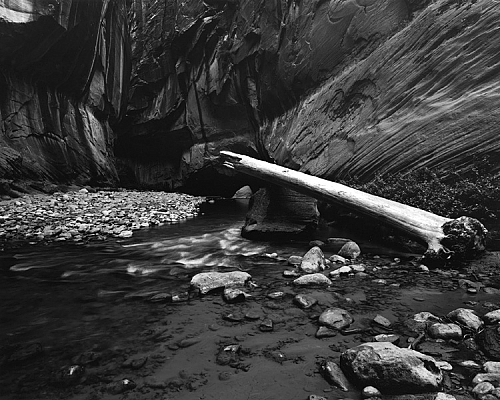 Log, Zion Narrows