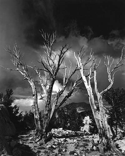 White Bark Ghosts, 60 Lake Basin