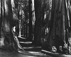 Sequoia - Kings Canyon