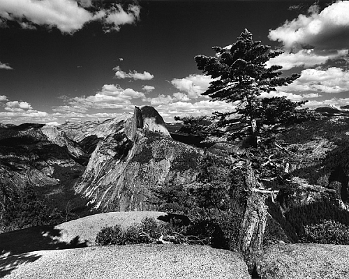 Half Dome and Tree, Glacier Point