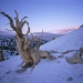 Bristlecone, Early Winter